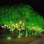 Enfeites coloridos de Natal, enfeitando árvores na rua de Bonito/Pernambuco.